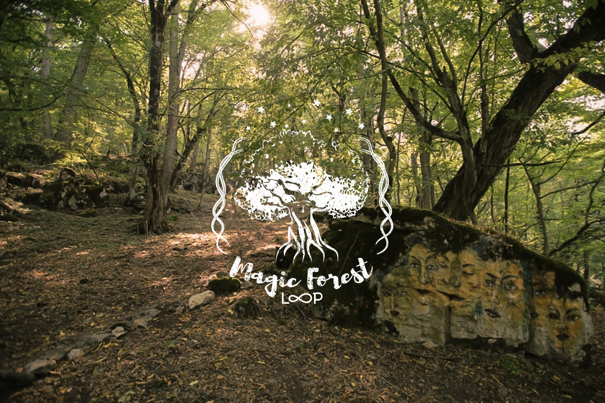 magic forest cover